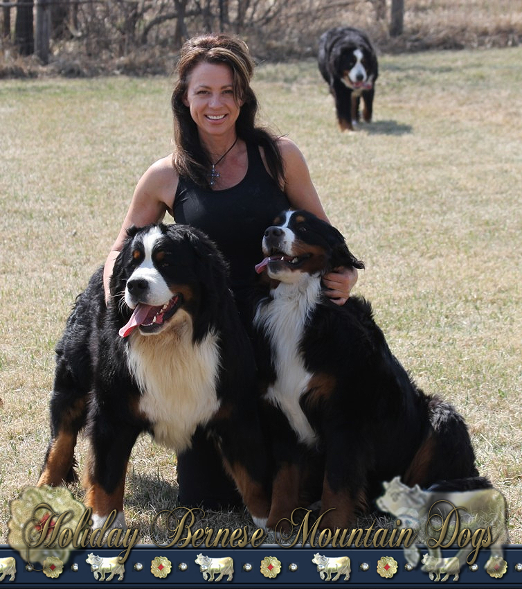 Pictures Of Puppies Burmese Mountain Dogs
